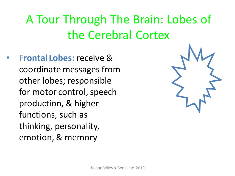 A Tour Through The Brain: Lobes of the Cerebral Cortex