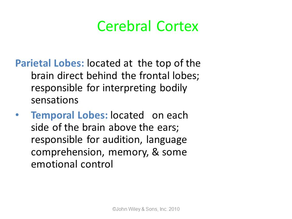 Cerebral Cortex Parietal Lobes: located at the top of the brain direct behind the frontal lobes; responsible for interpreting bodily sensations.