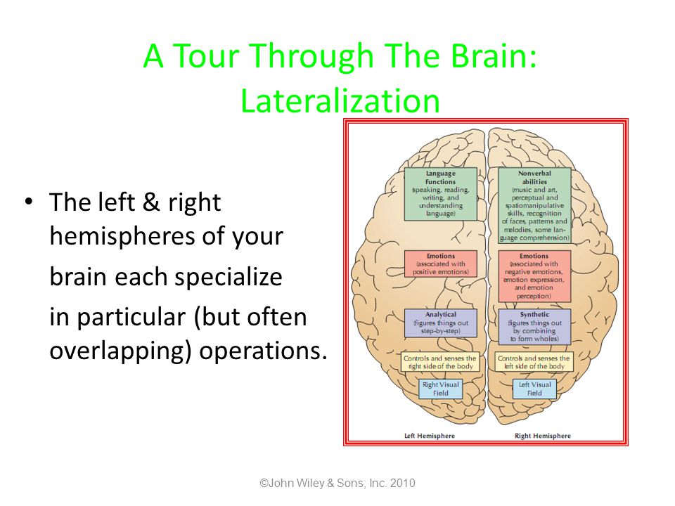 A Tour Through The Brain: Lateralization