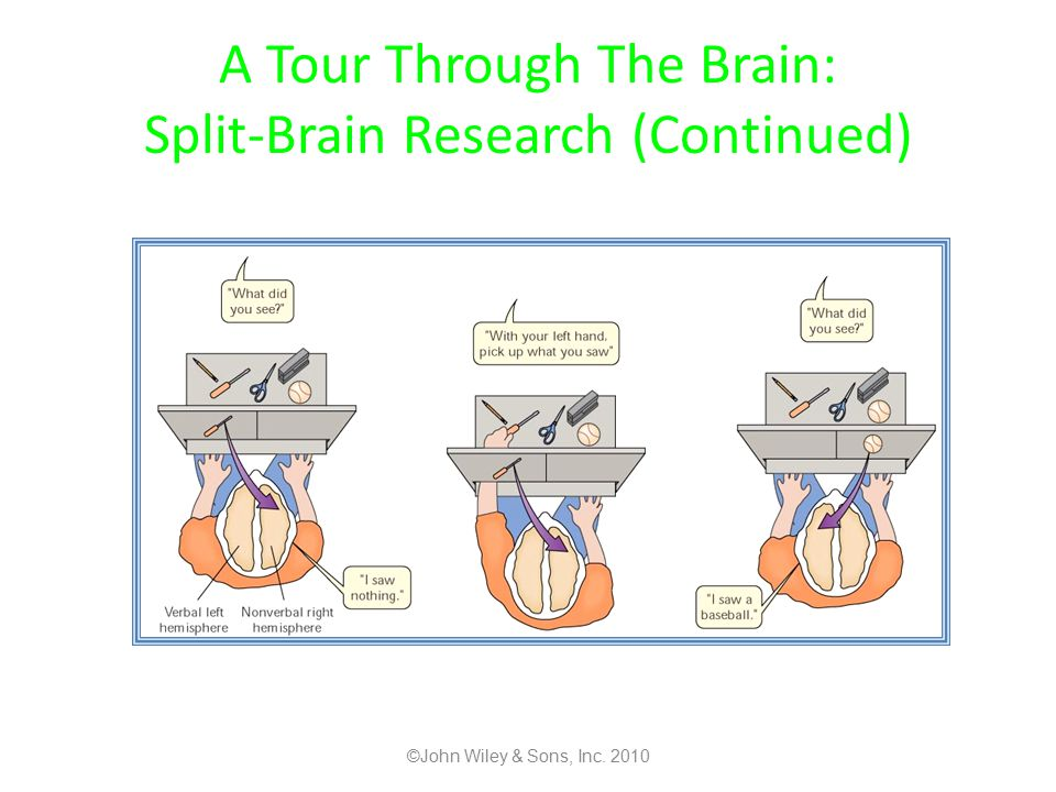 A Tour Through The Brain: Split-Brain Research (Continued)