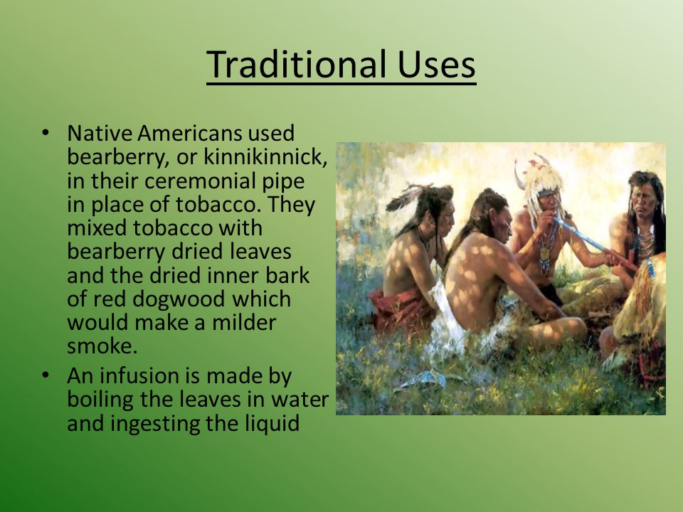 Ethnobotanical Plants of North America - ppt video online