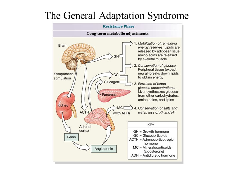 The General Adaptation Syndrome