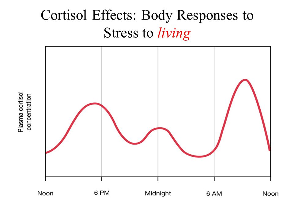 Cortisol Effects: Body Responses to Stress to living
