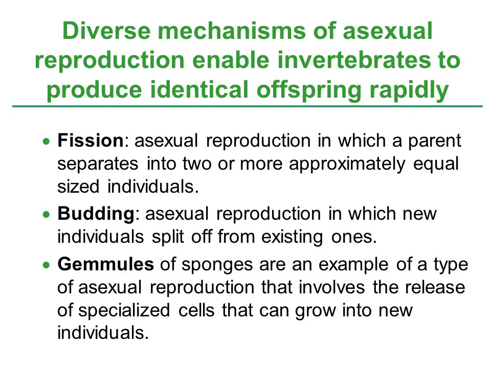 Asexual reproduction budding advantages of sole