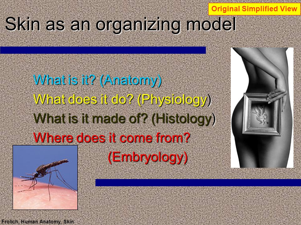 Skin as an organizing model - ppt download