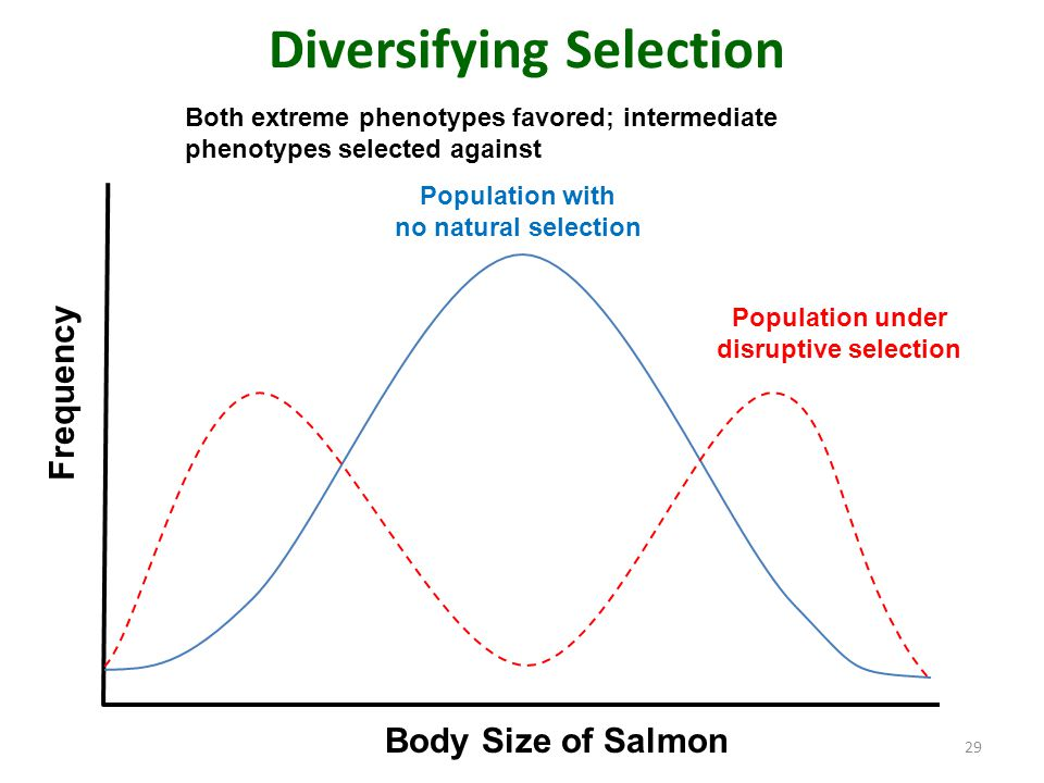 Is Diversifying Selection A Pattern Of Natural Selection