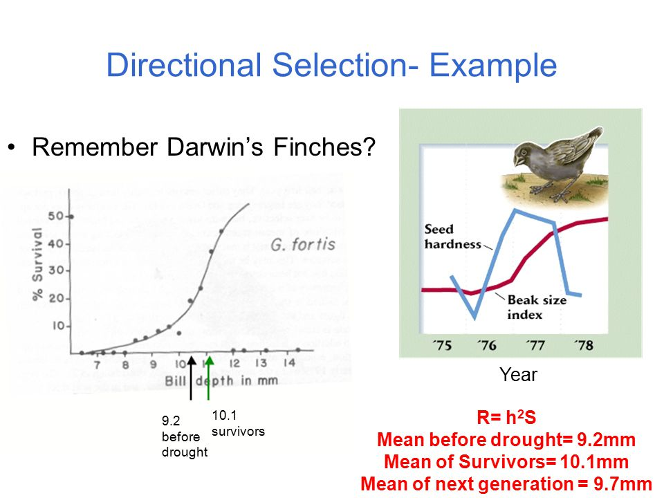Evolution By Natural Selection As A Syllogism Ppt Download