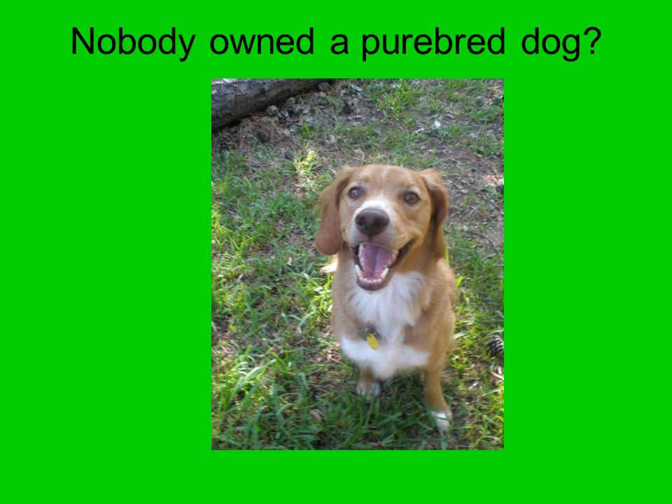 Nobody owned a purebred dog