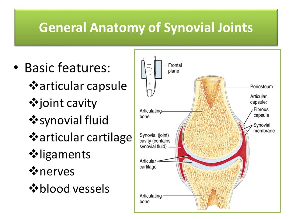 """synovial joints p4 ip Share on facebook, opens a new window share on twitter, opens a new window share on linkedin share by email, opens mail client referred to as """"snaps"""" their main purpose is to achieve hemostasis (control of the flow of blood) electrocautery is applied to the end of the vessel to achieve final."""