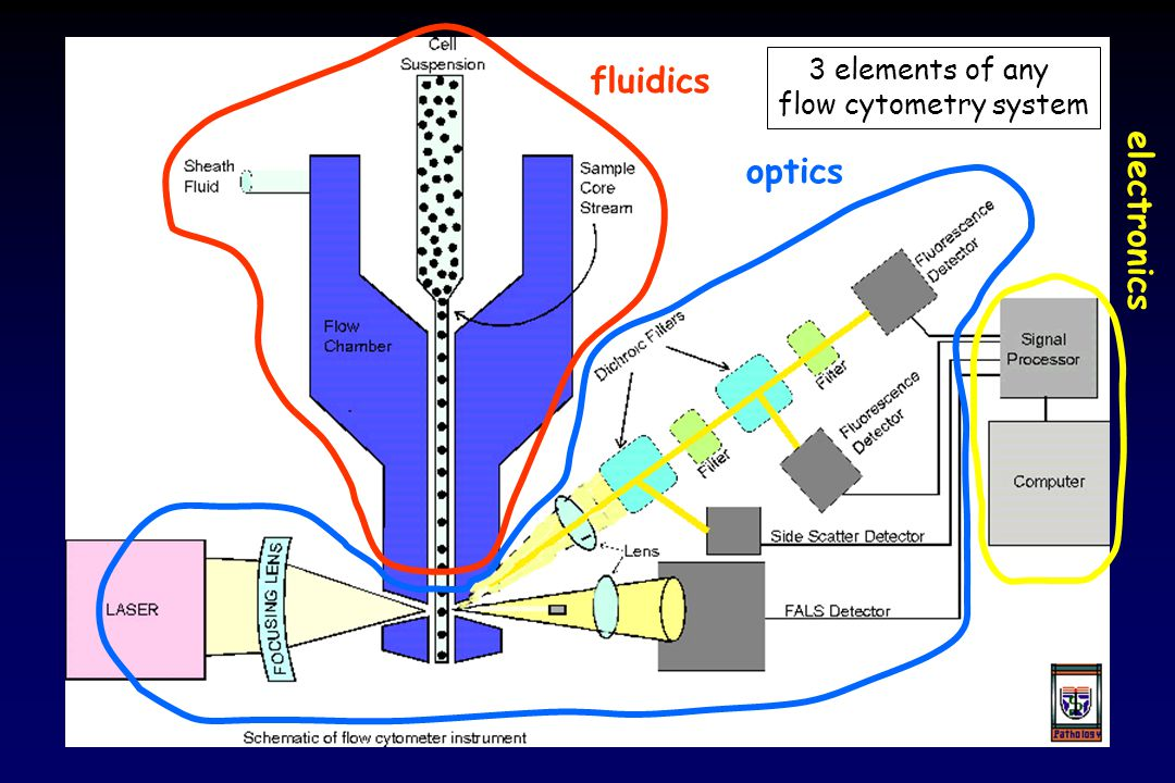 Introduction to the Principles of Flow Cytometry - ppt video online