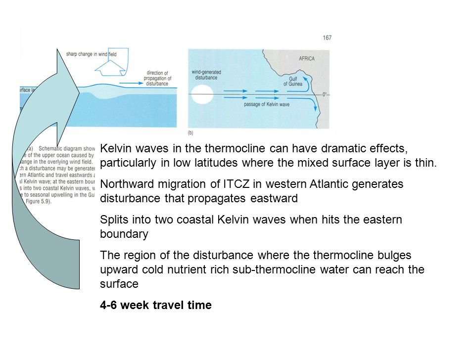 Kelvin waves in the thermocline can have dramatic effects, particularly in low latitudes where the mixed surface layer is thin.