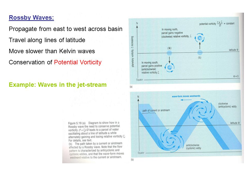 Rossby Waves: Propagate from east to west across basin. Travel along lines of latitude. Move slower than Kelvin waves.
