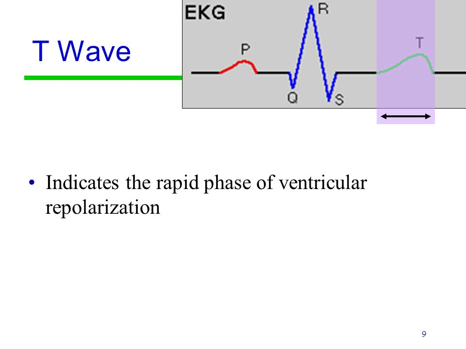 T Wave Indicates the rapid phase of ventricular repolarization