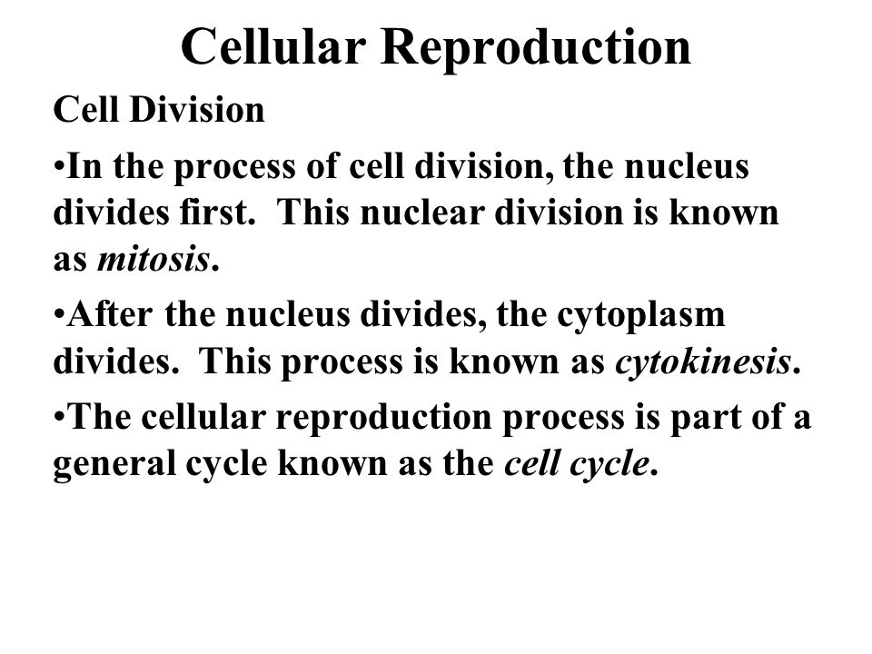 The nuclear division of asexual cell reproduction is called