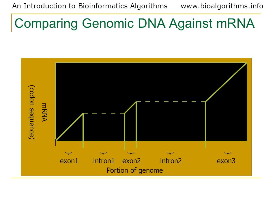 Comparing Genomic DNA Against mRNA