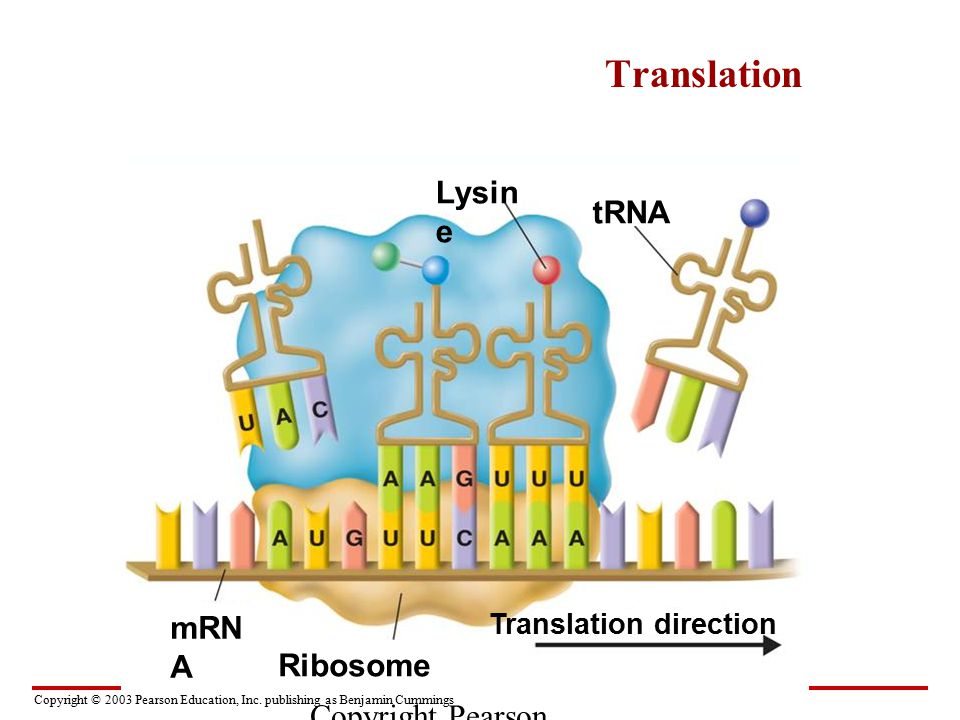 1 Dna Rna Structure 2 Transcription Translation Ppt Video