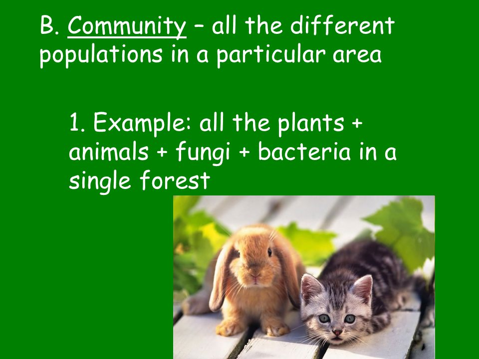 B. Community – all the different populations in a particular area