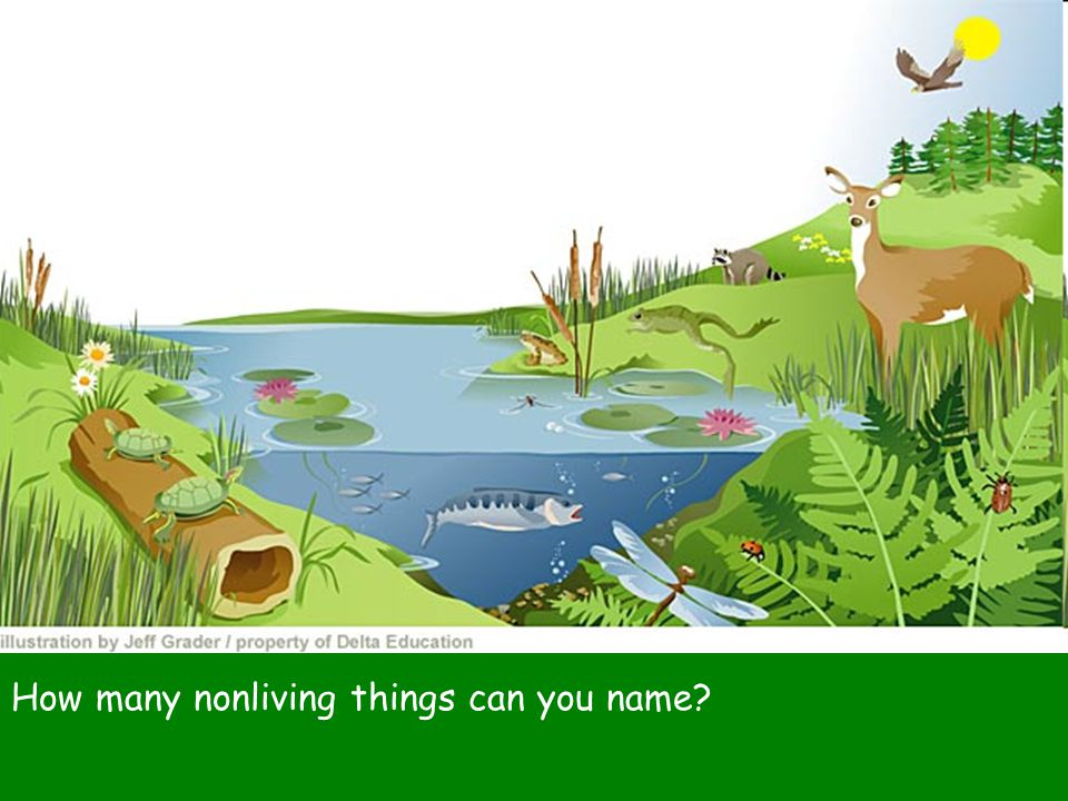 How many nonliving things can you name