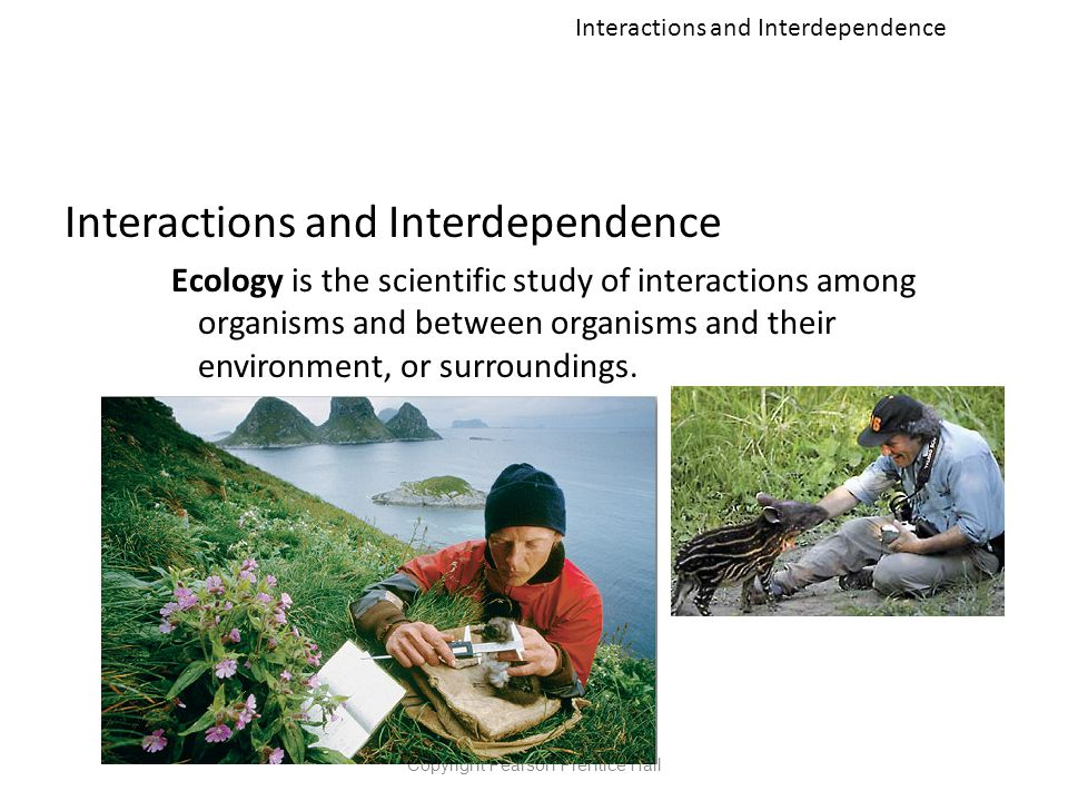 Interactions and Interdependence