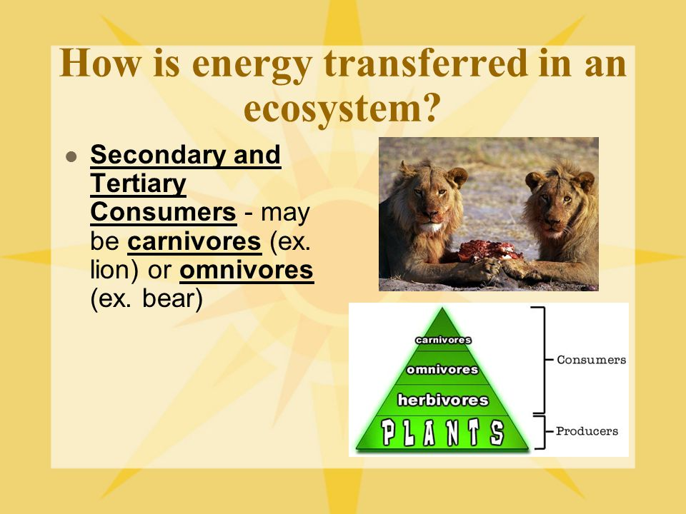 How is energy transferred in an ecosystem