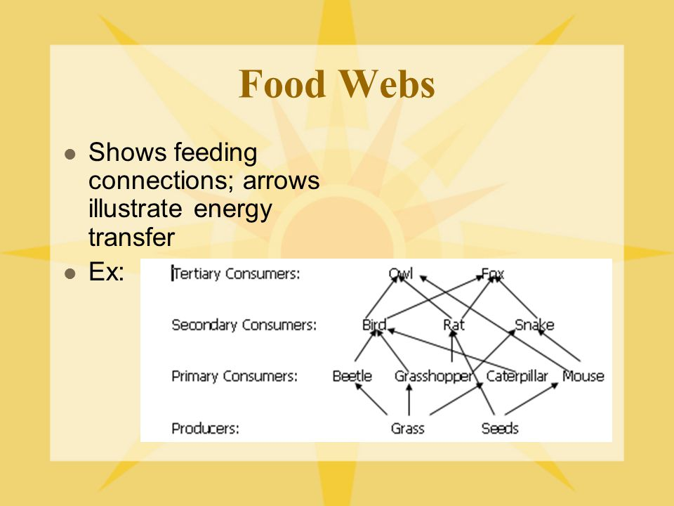 Food Webs Shows feeding connections; arrows illustrate energy transfer