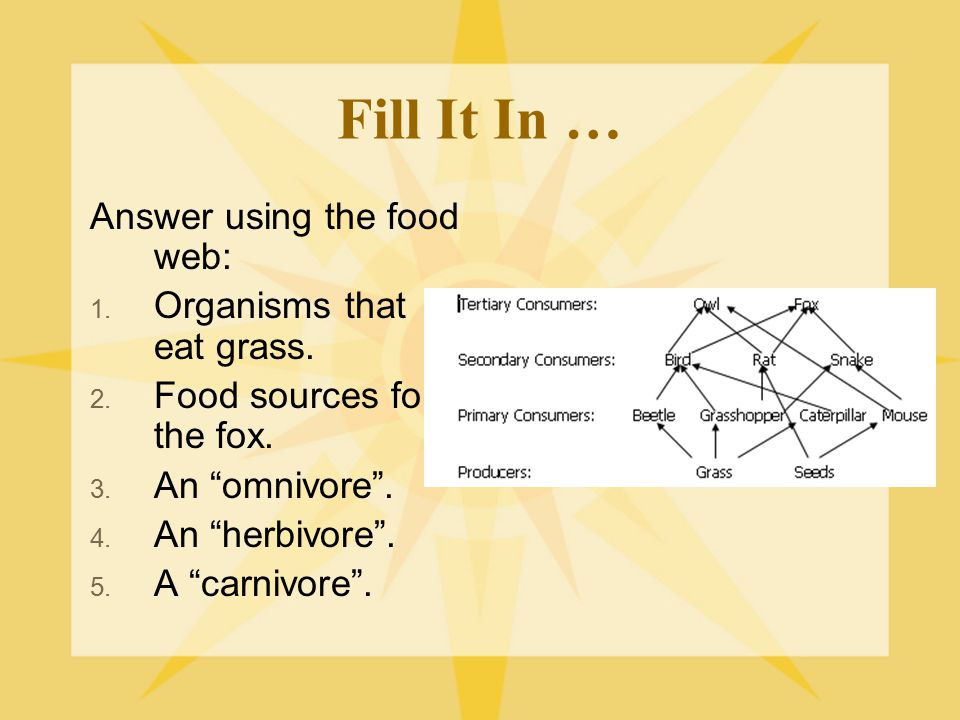 Fill It In … Answer using the food web: Organisms that eat grass.