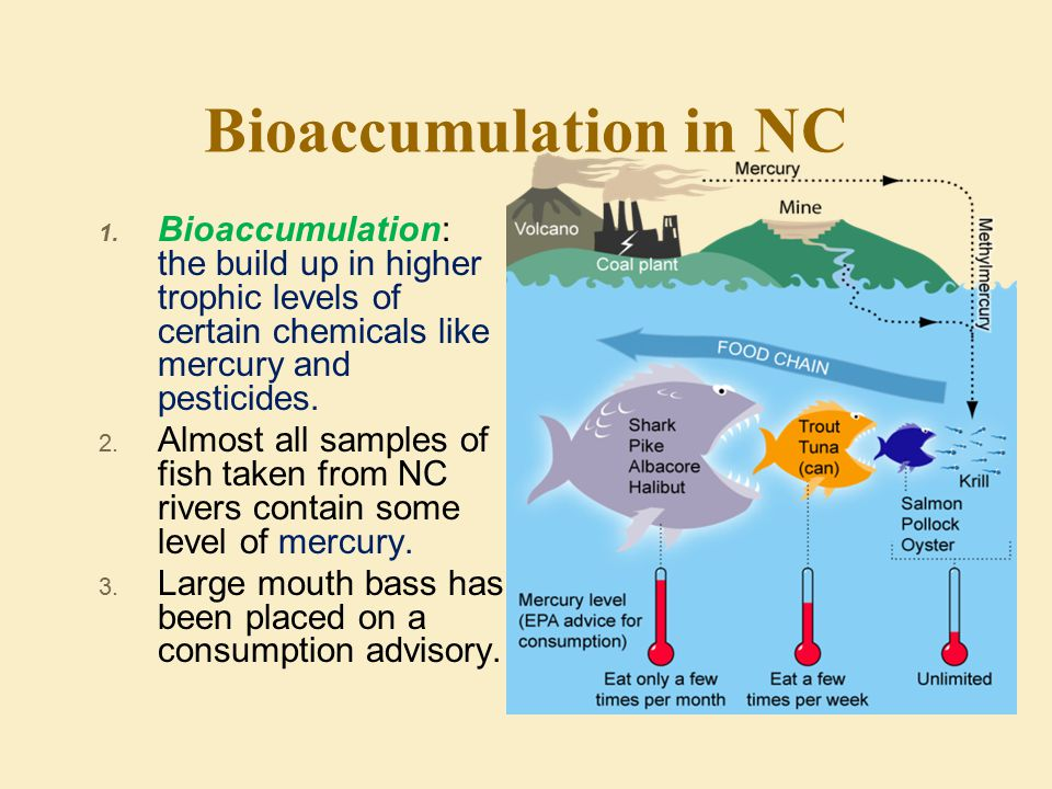 Bioaccumulation in NC Bioaccumulation: the build up in higher trophic levels of certain chemicals like mercury and pesticides.
