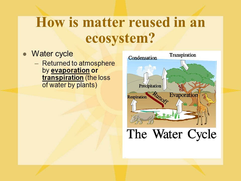 How is matter reused in an ecosystem