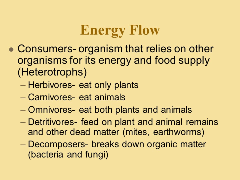 Energy Flow Consumers- organism that relies on other organisms for its energy and food supply (Heterotrophs)
