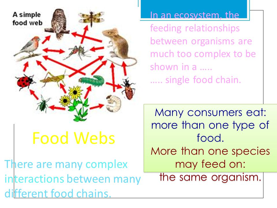 different food chains in an ecosystem the feeding relationships between organisms are much too complex to be shown