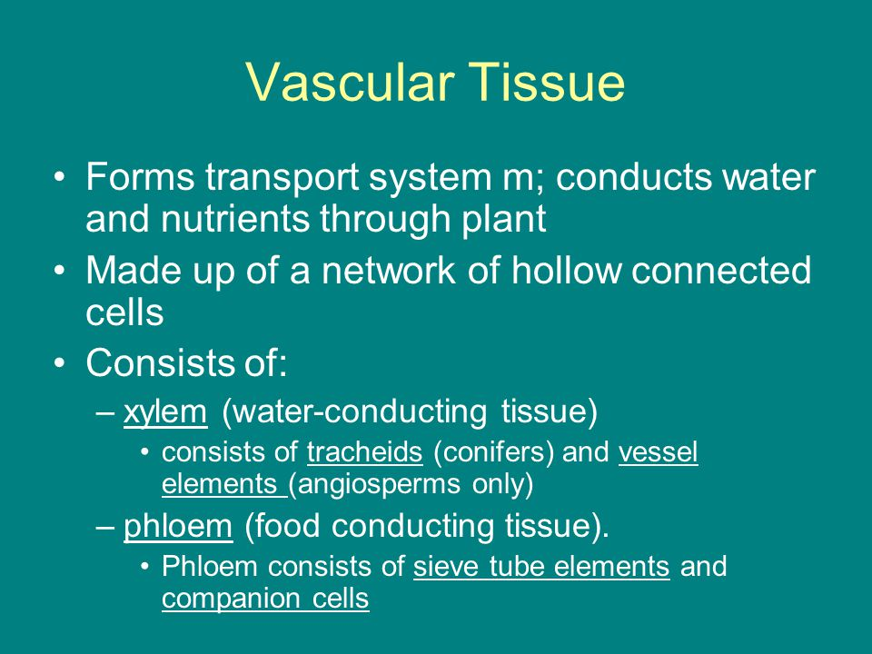 Vascular Tissue Forms transport system m; conducts water and nutrients through plant. Made up of a network of hollow connected cells.