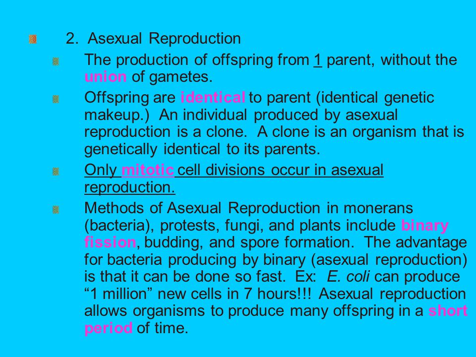 Gametes are produced by what type of cell division in asexual reproduction