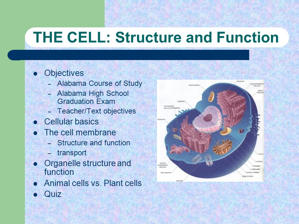 Structure and Function - ppt video online download