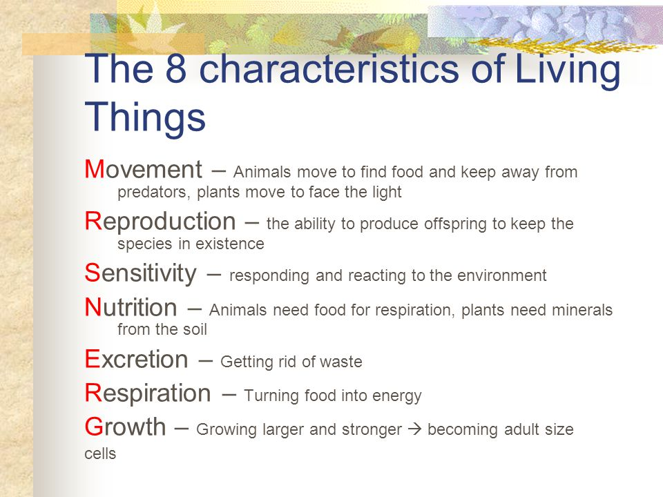 The 8 Characteristics Of Living Things