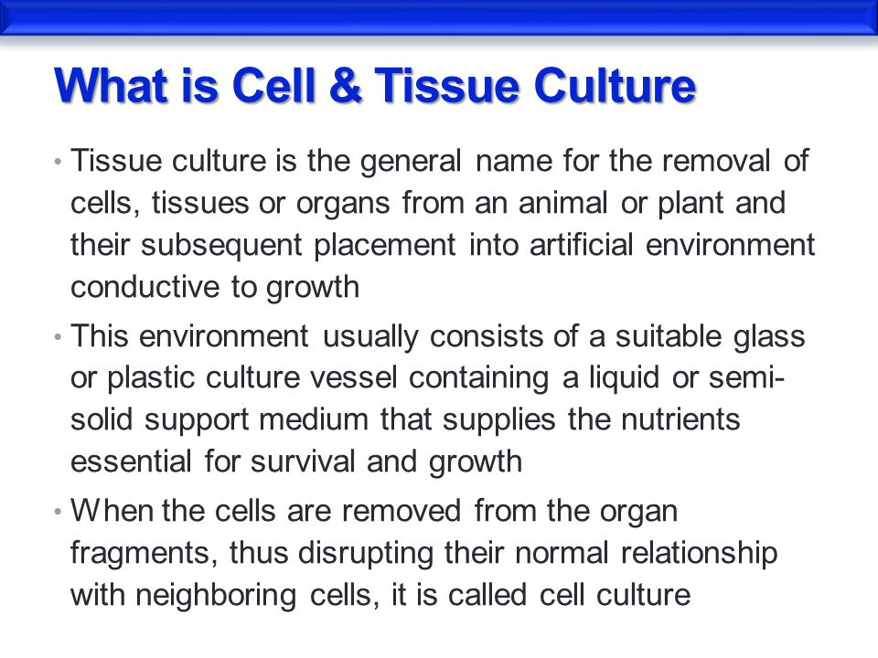 Cell Culture  - ppt video online download