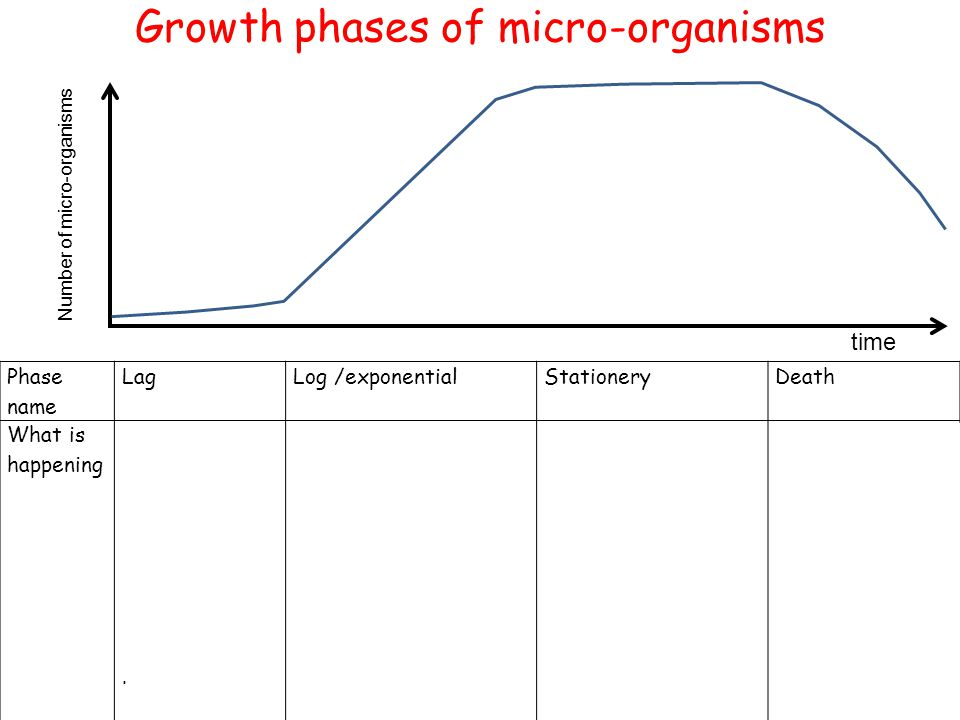Growth phases of micro-organisms