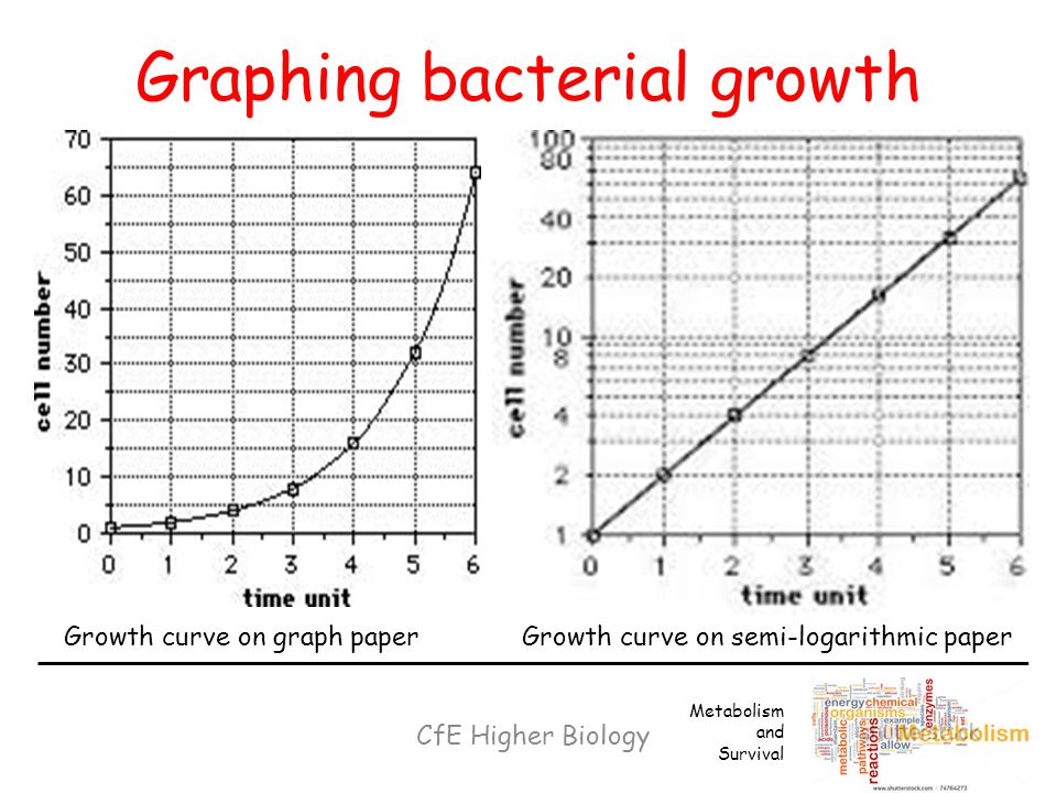 Graphing bacterial growth