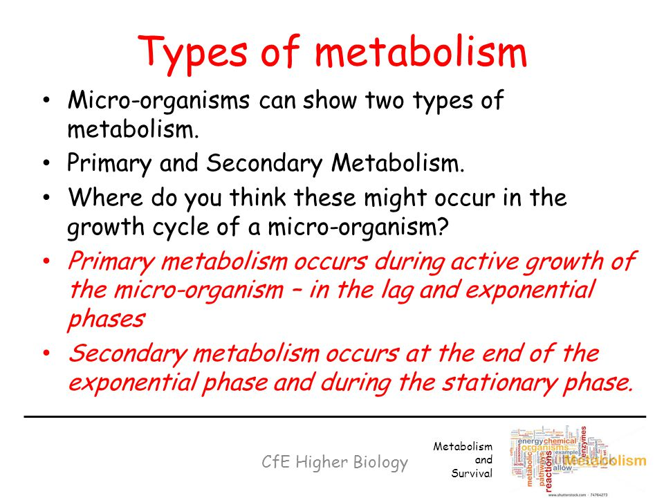 Types of metabolism Micro-organisms can show two types of metabolism.