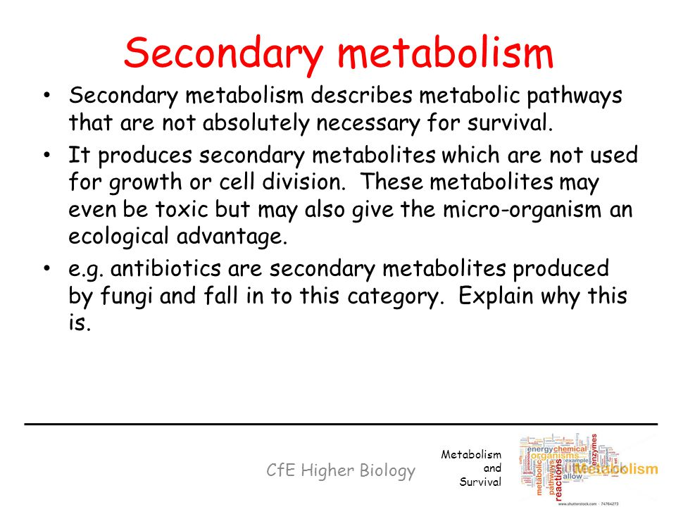 Secondary metabolism Secondary metabolism describes metabolic pathways that are not absolutely necessary for survival.