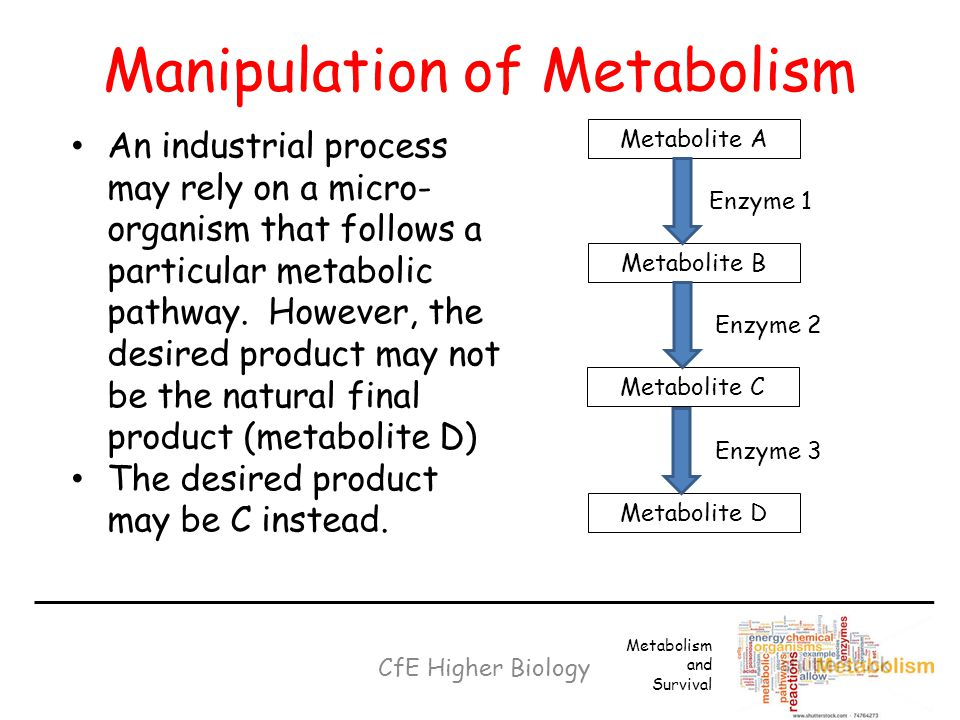 Manipulation of Metabolism