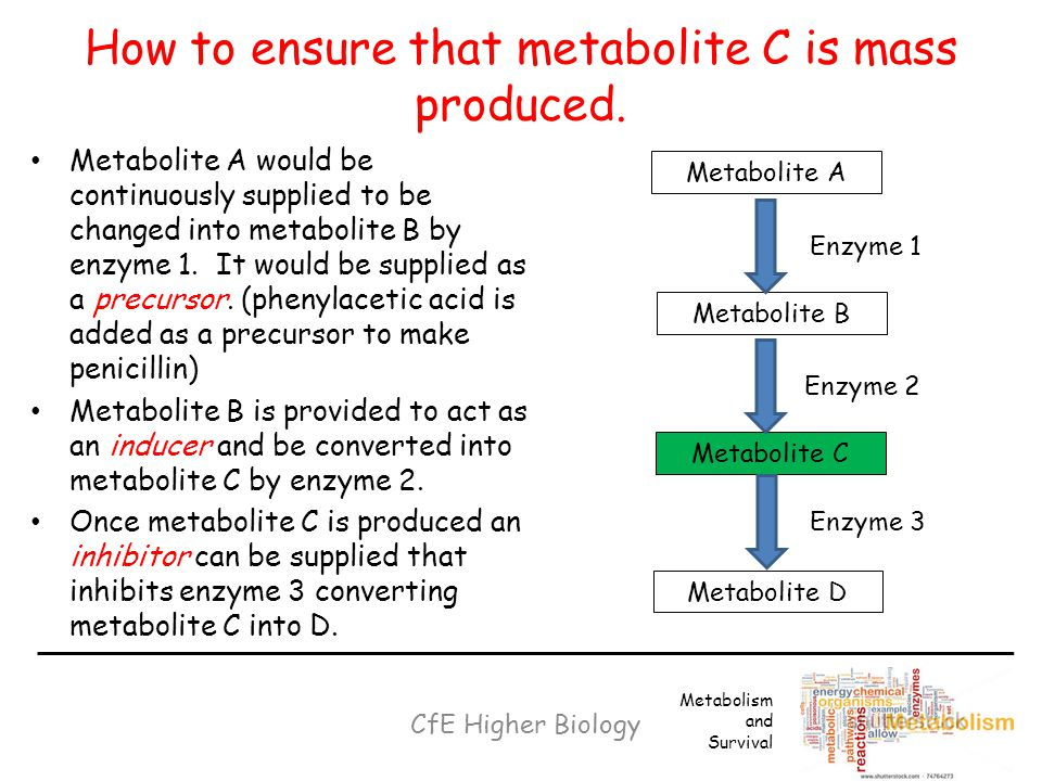 How to ensure that metabolite C is mass produced.