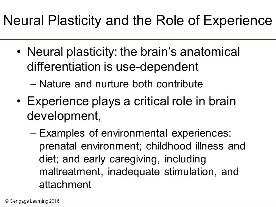 Neural Plasticity and the Role of Experience
