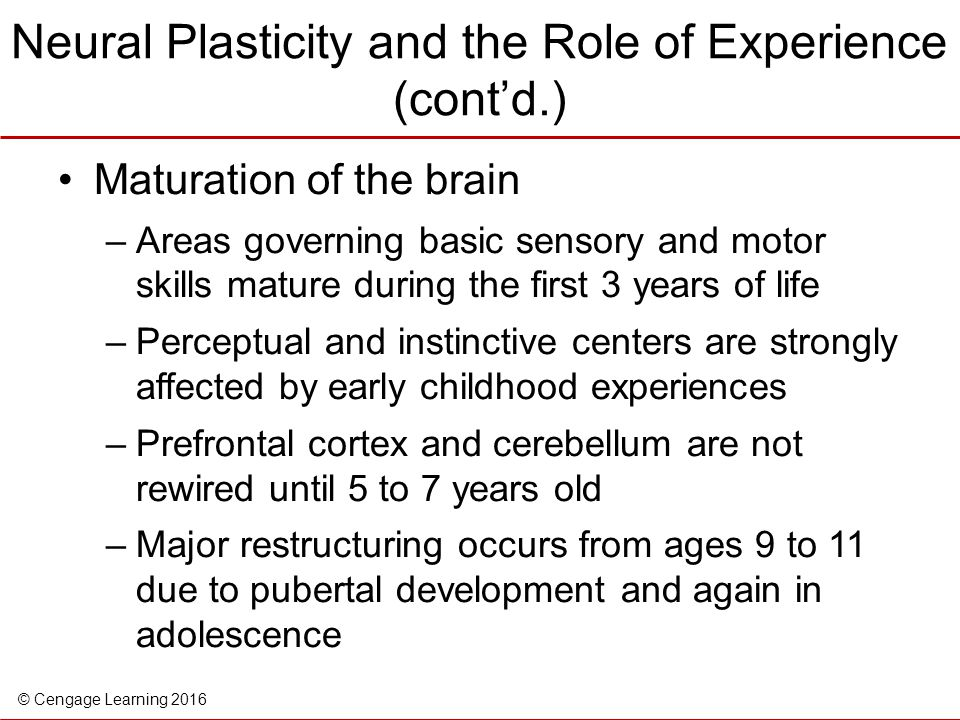 Neural Plasticity and the Role of Experience (cont'd.)