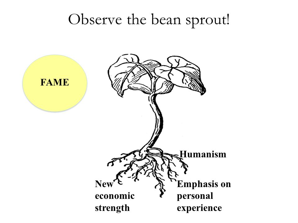 Observe the bean sprout!