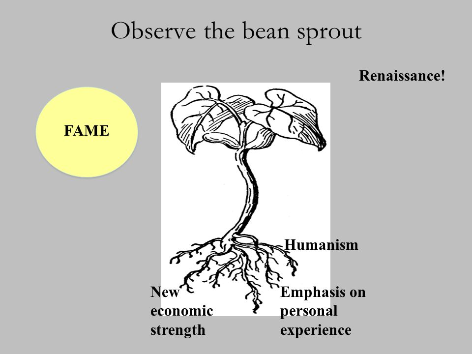 Observe the bean sprout