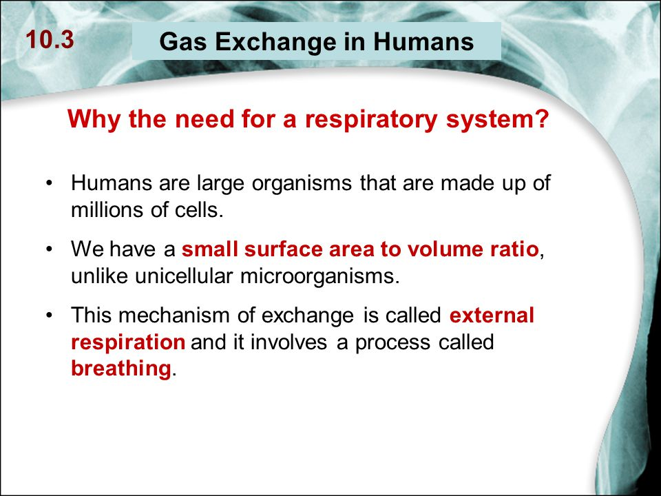 mechanism of respiration in humans pdf