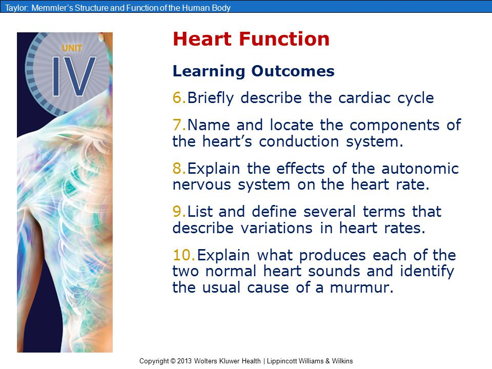 Chapter 13: The Heart. - ppt video online download