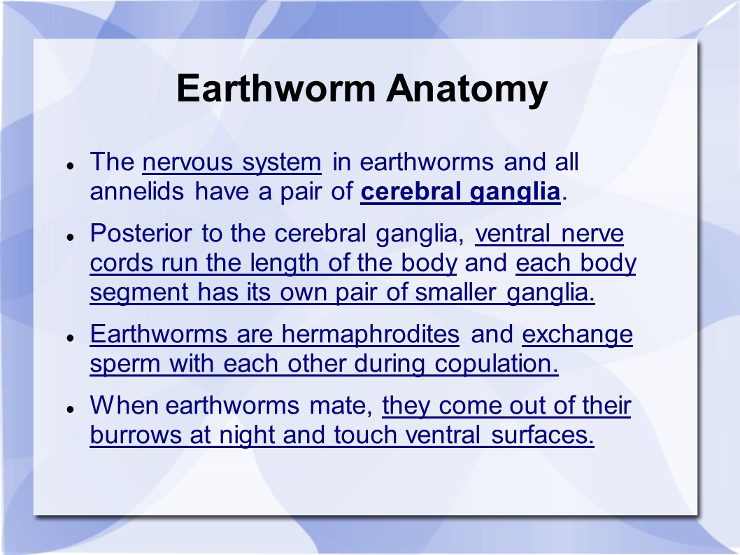 Chapter 11, Phylum Annelida (Segmented Worms) - ppt video online ...