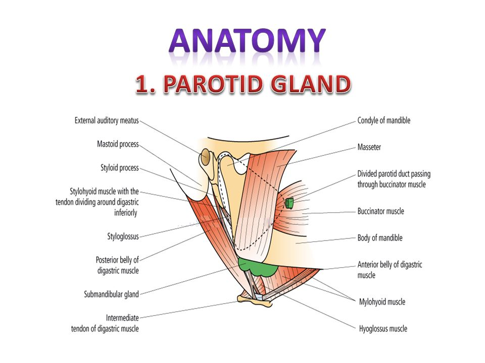 Salivary Gland Disorders Ppt Video Online Download