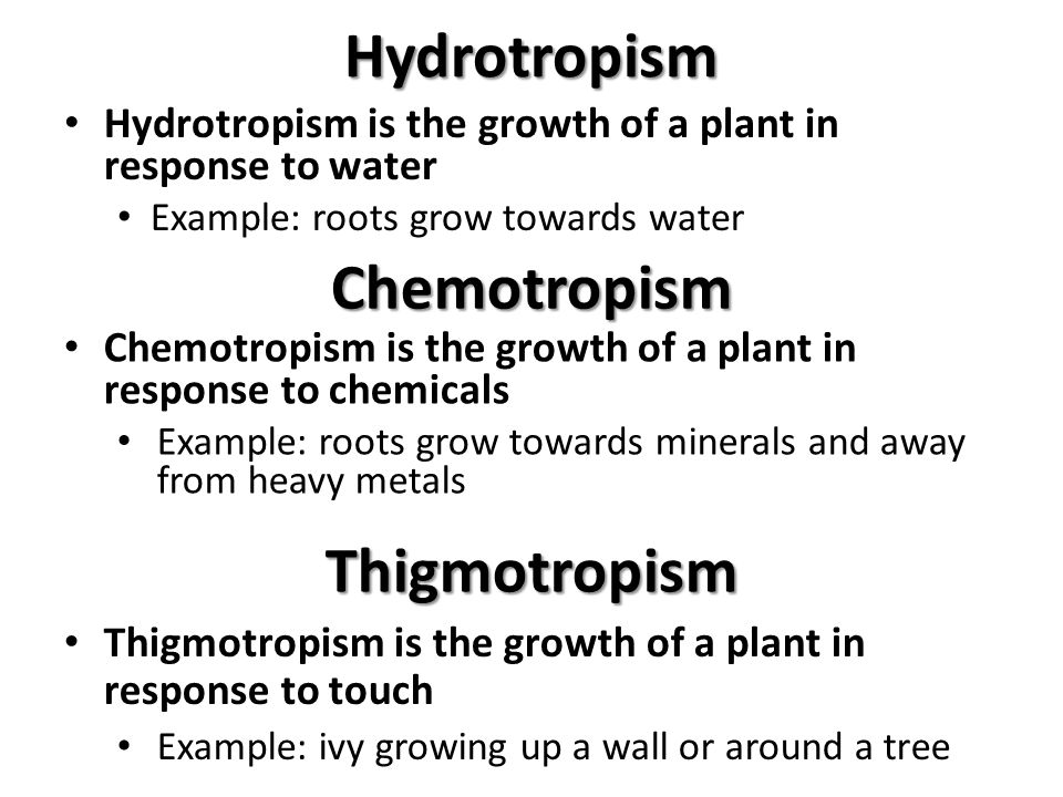 Example Of Thigmotropism Choice Image Example Cover Letter For Resume